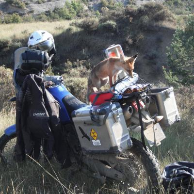 Goupil Rider